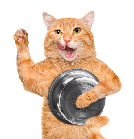Hungry cat holding food bowl, isolated on white background.
