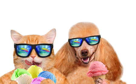 aliments droles: Chat et chien portant des lunettes de détente dans l'arrière-plan de la mer. Red chat et de chien mange de la crème glacée. Isolé sur blanc.