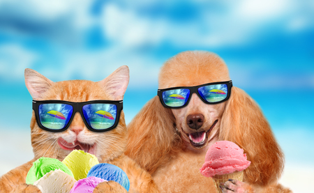 Cat and dog wearing sunglasses relaxing in the sea background. Red cat and dog eats ice cream. Фото со стока