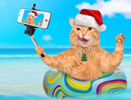 camra: Cat in red Christmas hat relaxing on air mattress in the sea taking a selfie together with a smartphone.