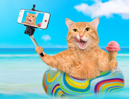 camra: Cat relaxing on air mattress in the sea taking a selfie together with a smartphone.