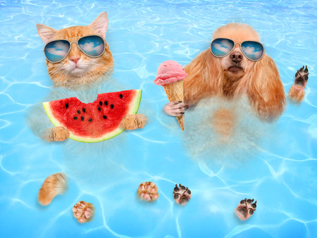 Cat and dog wearing sunglasses relaxing in the sea. Red cat eats watermelon and dog eats ice cream. Stockfoto