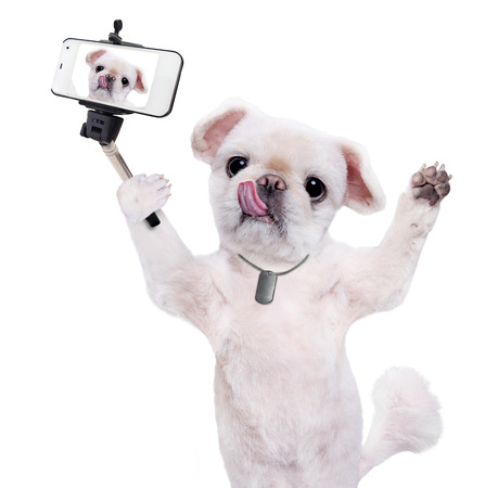 camra: Dog taking a selfie with a smartphoner. Isolated on the white.