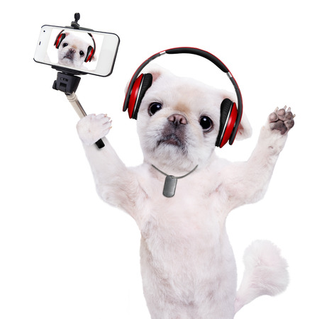 camra: Dog headphones taking a selfie with a smartphoner. Isolated on the white.