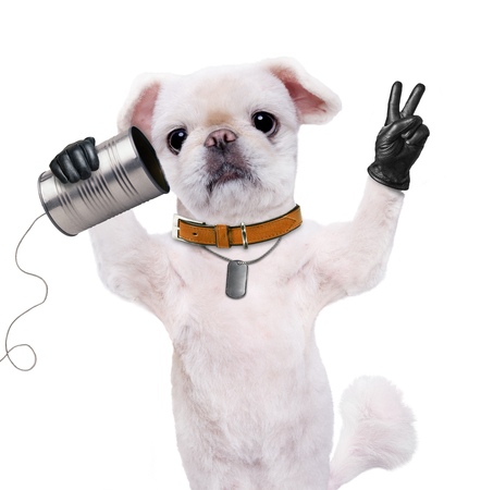 animal idiot: Dog on the phone with a can. Dog with peace fingers in black leather. Isolated on the white.