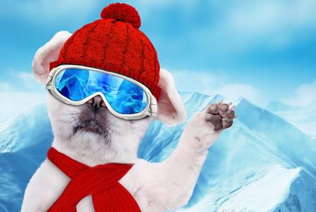 ski goggles: Dog wearing ski goggles relaxing in the mountain.