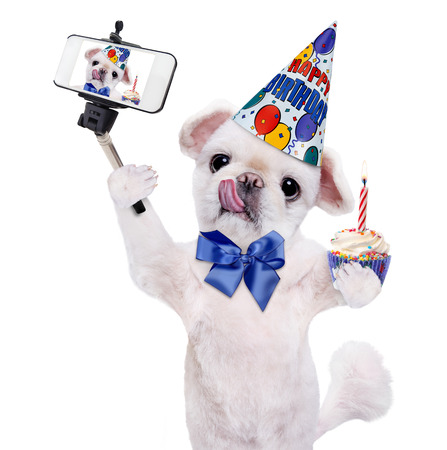 camra: Birthday dog ??taking a selfie together with a smartphone. Isolated on white. Stock Photo