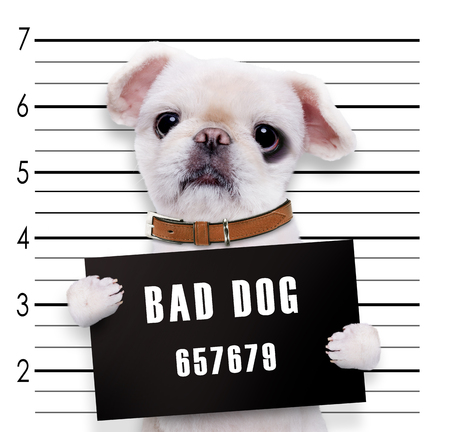 felon: Bad dog. Stock Photo