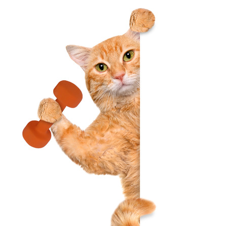 Fitness cat lifting a dumbbell behind a white banner.