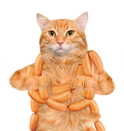 Cat with sausages on the white background.