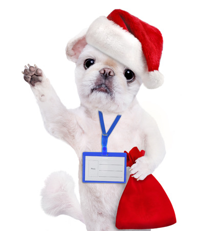 ides: Dog in red Christmas hat wear blank white badge mockup. Isolated on the white. Stock Photo