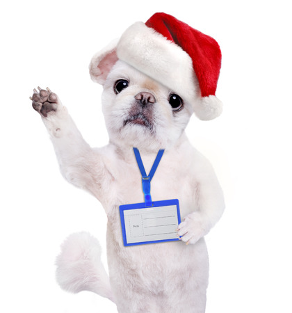 nametag: Dog in red Christmas hat wear blank white badge mockup. Isolated on the white. Stock Photo