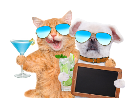 Cat and dog wearing sunglasses relaxing in the white background. Cat and dog holds blank blackboard. Stock Photo