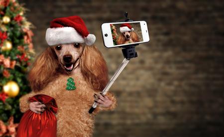 Cane in cappello rosso di Natale prendendo un selfie con uno smartphone. Archivio Fotografico - 84186928