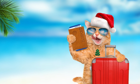 Red cat with a suitcase and a document on the sea background. Christmas. Stock Photo