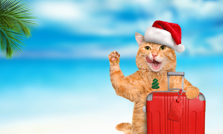 Red cat with a suitcase on the sea background. Christmas concept
