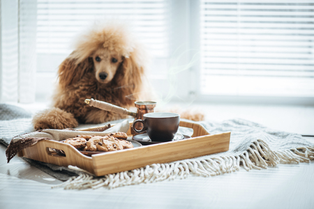Cup with coffee, turk and cookie on wooden serving tray. Still life details in home interior of living room. Dog resting on the floor. Stock Photo