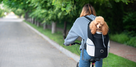 Cute dog peeking from animal carrying backpack.