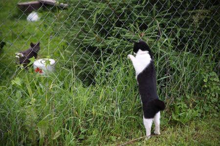 realiseren: Feline bijeen, katten realiseren betrekkingen en eigen gebied  Stockfoto