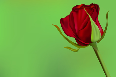 Red rose on smooth green background. Vector illustration