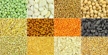 Grains, cereals, seeds and beans - collection