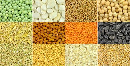 cereales: Granos, cereales, semillas y habas - colección Foto de archivo