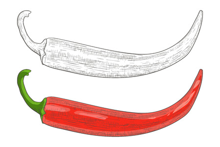 Chili pepper. Black and white and red hand drawn sketch. Vector illustration isolated on white background.