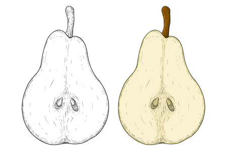 Half of pear. Colored and black and white hand drawn sketch. Vector illustration isolated on white background.