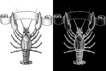 Lobster. Hand drawn sketch. Vector illustration on black and white.