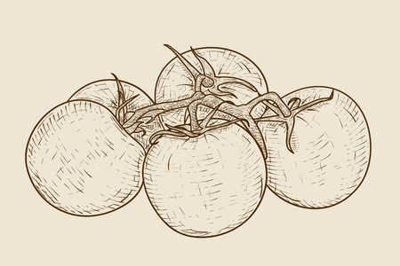Tomatoes on a Hand drawn sketch Stock Illustratie