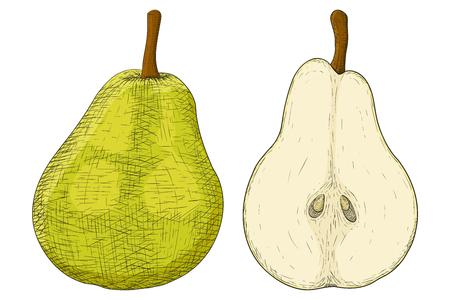 Green pear. Hand drawn sketch