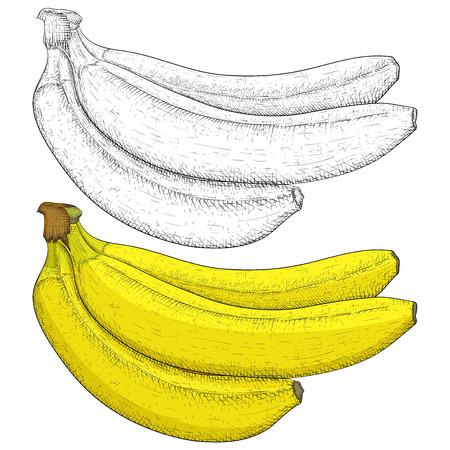 Banana hand drawn sketch Stock Illustratie