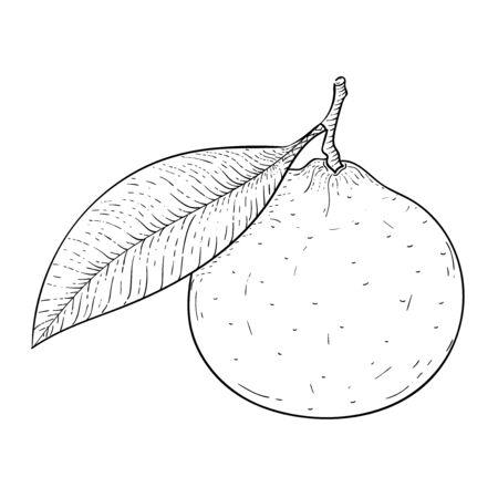 Clementine. Hand drawn sketch