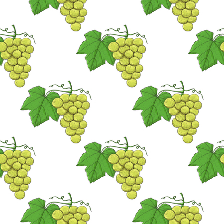 White grapes. Seamless pattern. Hand drawn sketch