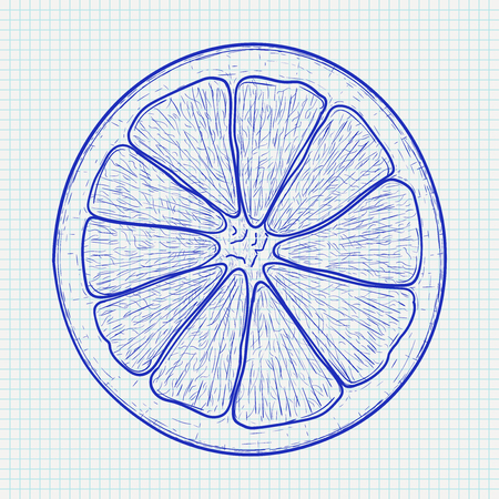 Orange slice in blue hand drawn sketch on lined paper background. Illustration