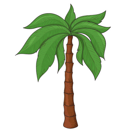 Palm tree. Colored sketch