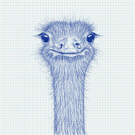 Ostrich sketch. Head closeup on lined paper background Vettoriali