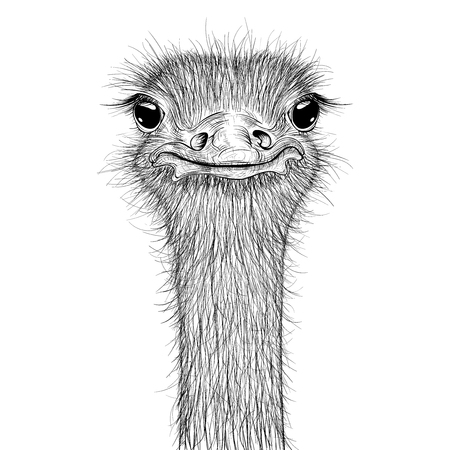 Ostrich sketch. Head closeup Stock Illustratie