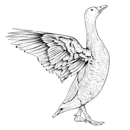 Goose sketch. Angry bird with lifted wings