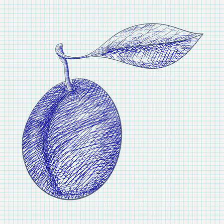 Plum. Hand drawn sketch on lined paper background. Vector illustration