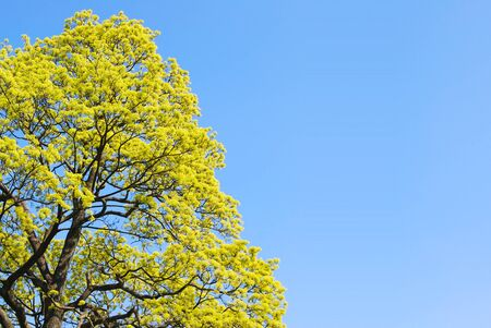 Green tree with the blue sky