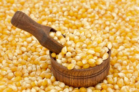 Corn seeds background. Raw mais with wooden scoop