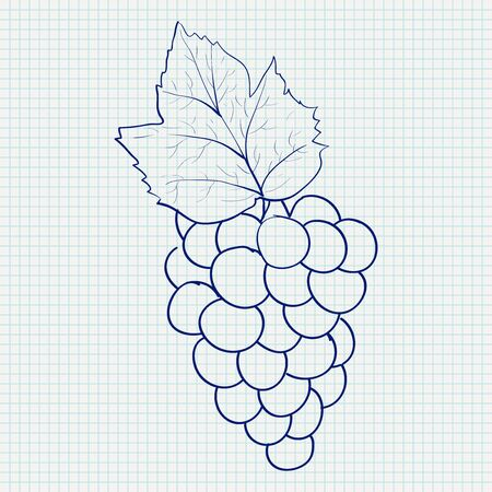Bunch of grapes. Sketch on lined paper background. Vector illustration Stok Fotoğraf - 133632060