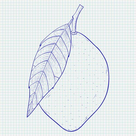 Lemon. Hand drawn sketch on lined paper background. Vector illustration