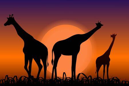 Giraffes. Back silhouettes in sunset Иллюстрация