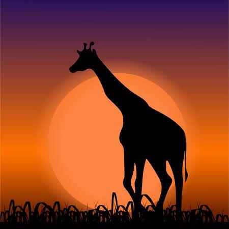 Giraffe on sunset background. Black silhouette. Vector illustration