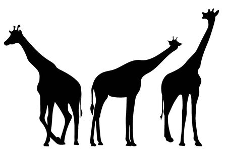 Giraffes. Back silhouettes. Vector illustration isolated on white background