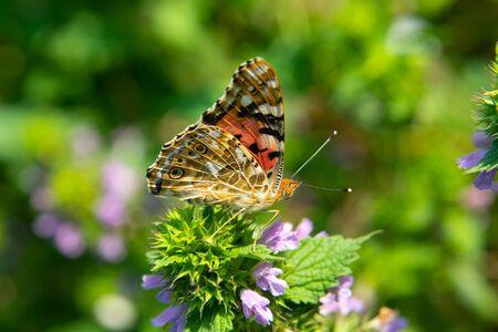 Beautiful summer butterfly sitting on a flower. Foto de archivo