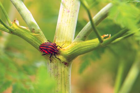 Red and black striped bug on a green plant.