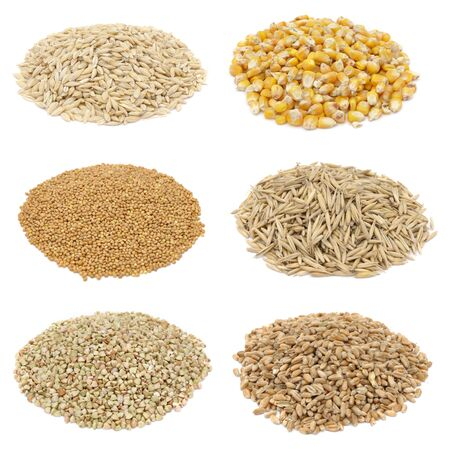 Cereals set - oat, wheat isolated on white background